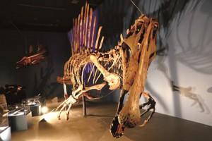 水中で泳ぐスピノサウルスの骨格を再現している